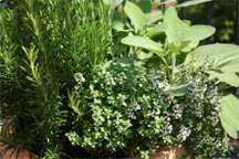 Create an herb garden to enjoy being outside